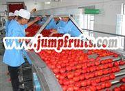 番茄酱设备