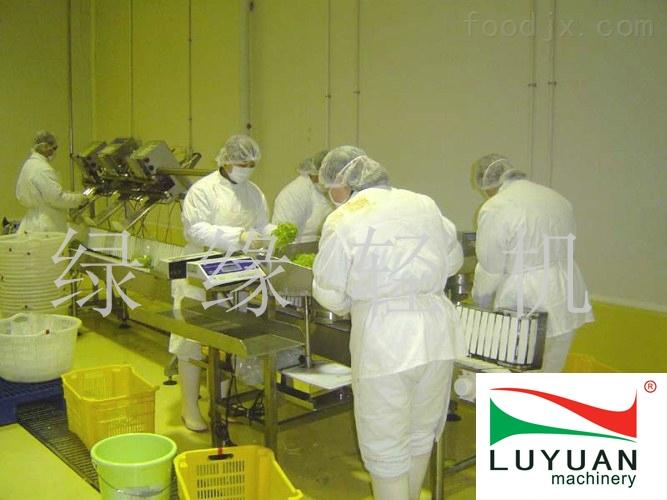小型净菜加工生产线厂家