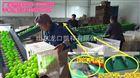 凯祥青枣选果机采用优质高弹材料,保护果肉不受碰损
