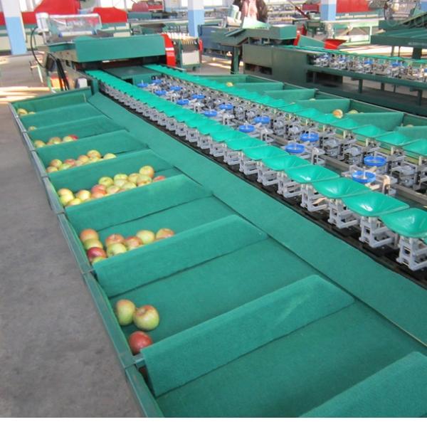 自动水果分选机 苹果选果机厂家