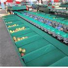 XGJ-SZ自动水果分选机 苹果选果机厂家