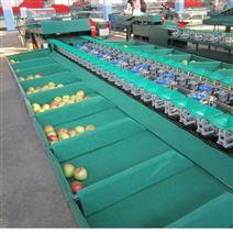 自動水果分選機 蘋果選果機廠家