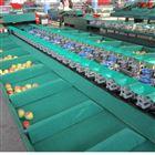 XGJ-SZ石榴分拣机 分选好帮手 分选机价格规格