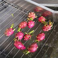 SZ3000厂家热销环保型全自动高效草莓专用清洗机