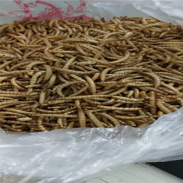 江苏黄粉虫微波干燥设备产量大