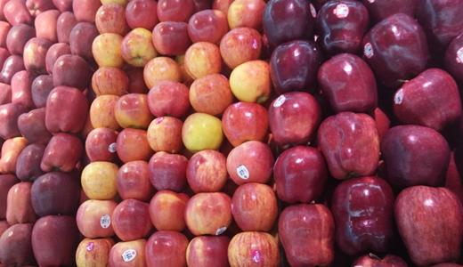 食品機械助力新疆農產品加工業提升行動實施