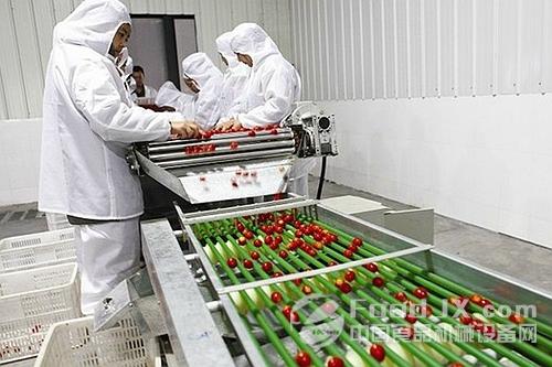 甘肃蔬菜产业潜力大 相关加工设备可乘胜追击