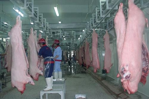 上海启动放心食品工程建设屠宰猪肉实现和质天津经营部定点兴荣图片