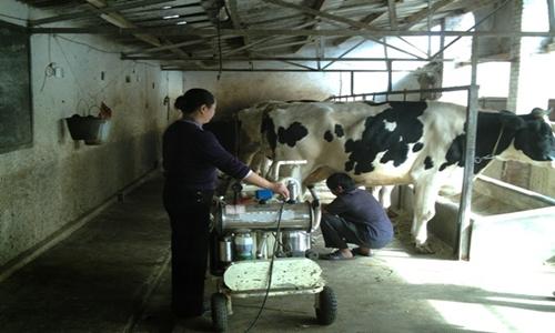 横县推动增量助力产好奶挤奶奶户地面又增收水泥设备油漆图片