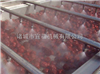 YQ-25型全自动大红枣清洗机流水线